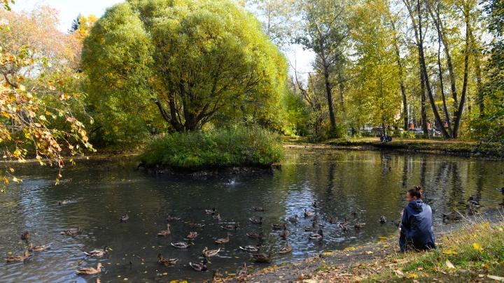 Вслед за ЦПКиО: меняем фирменный стиль шести городских парков, которым давно нужен ребрендинг