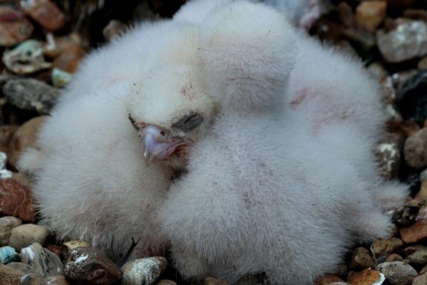 Птицы воспринимают крышу банка как часть естественной среды
