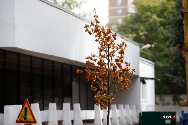 Городские деревья наряжаются в парадные цвета