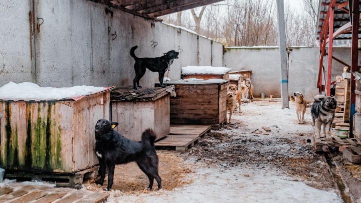 Пермские власти обсудили с общественниками вопрос «опекунства» бездомных собак