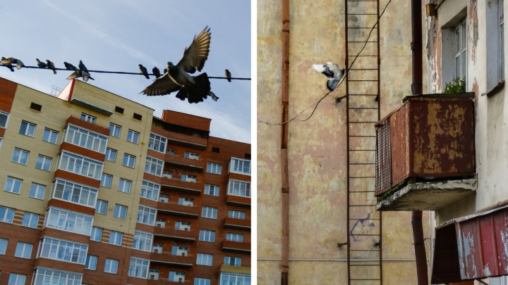 Продавать не спешат, зато активно покупают: как коронавирус изменил цены на квартиры в Архангельске