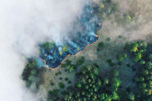 Сильный пожар тушат силами МЧС, Минприроды, волонтеров