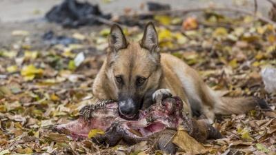 «Их ждет пожизненное заключение»: в Волгограде решают, как справиться со стаями бродячих собак