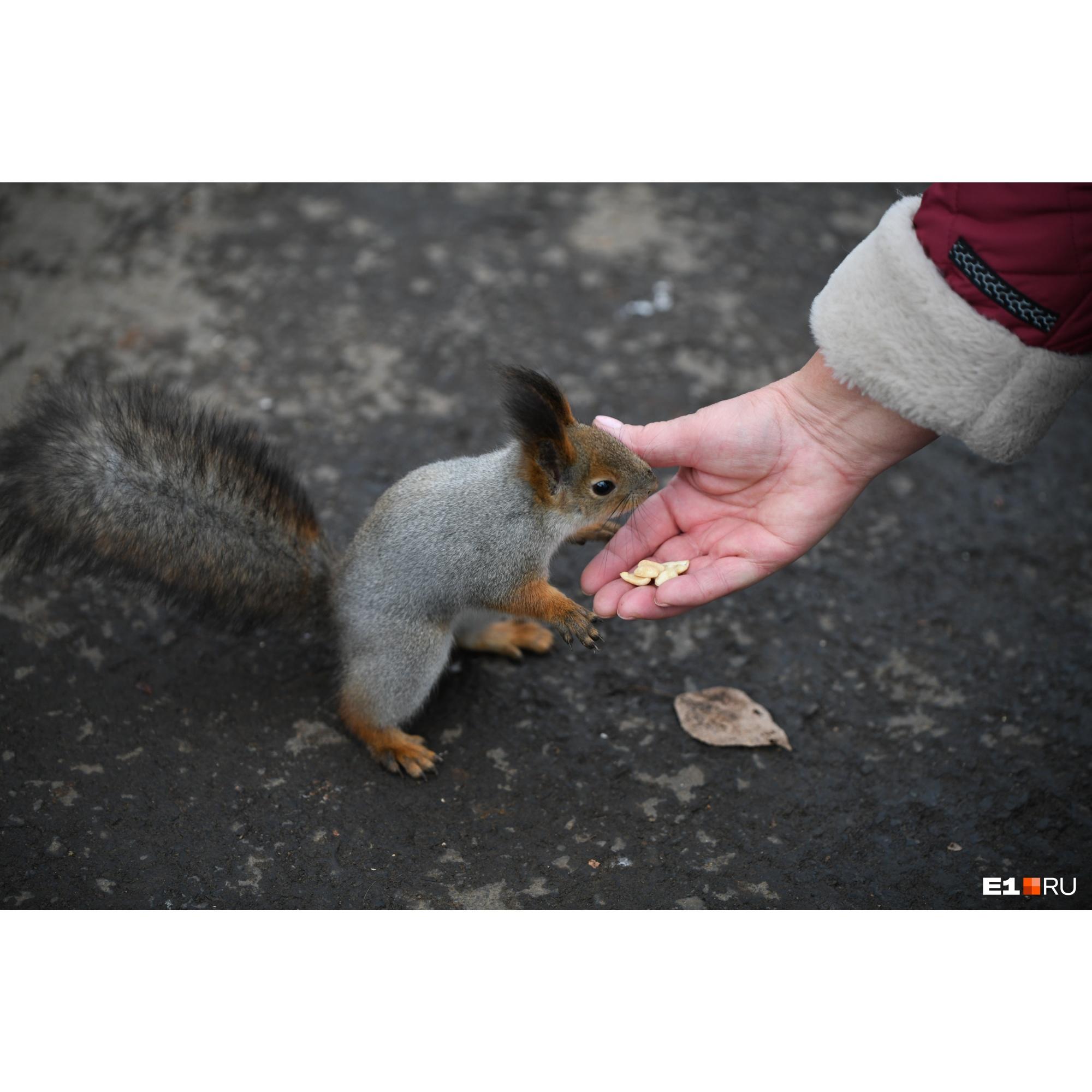 Посетители парка кормят их жареным арахисом