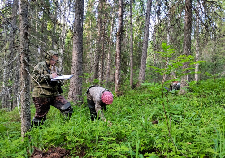 Участники экспедиции прошли много километров, изучили болота и малонарушенные леса