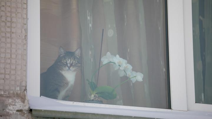 Хозяева уехали на дачу и забыли кота на карнизе за окном. Спасать его приехали альпинисты