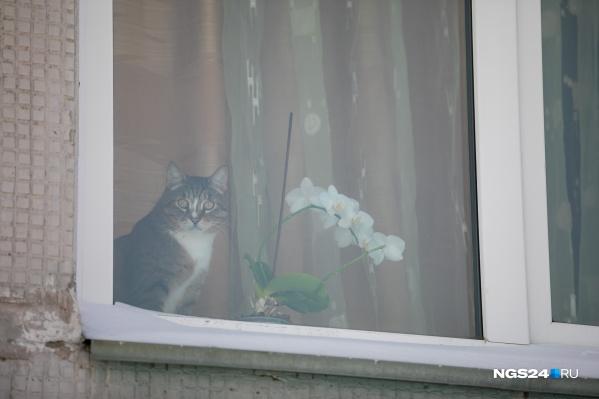 Видимо, кот отправился погулять и его забыли на улице за окном