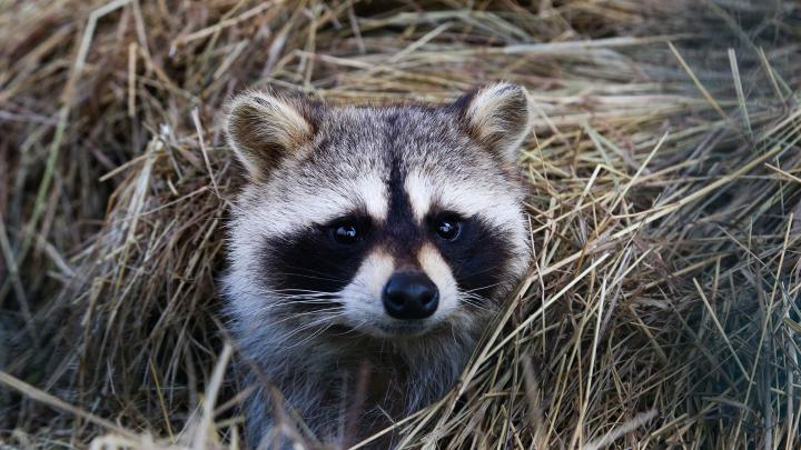 На вечном карантине: как встретили коронавирусную весну обитатели уфимского зоопарка