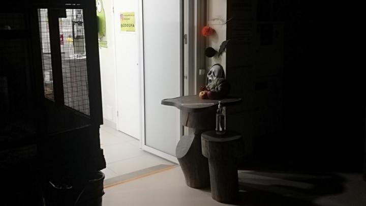 «Когда ворона выключила свет, закричал петух»: как отметили Хеллоуин в уфимском зоопарке