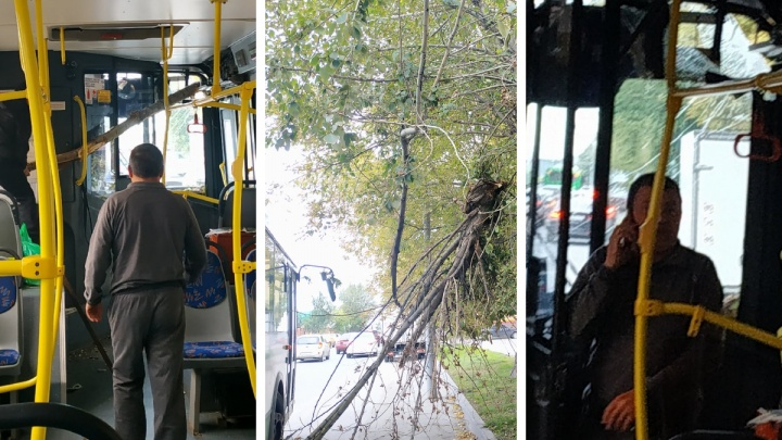 В Тюмени ветка пробила стекло автобуса. Пассажирка чудом не пострадала