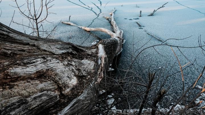 В Самарской области откроют охоту на бобров