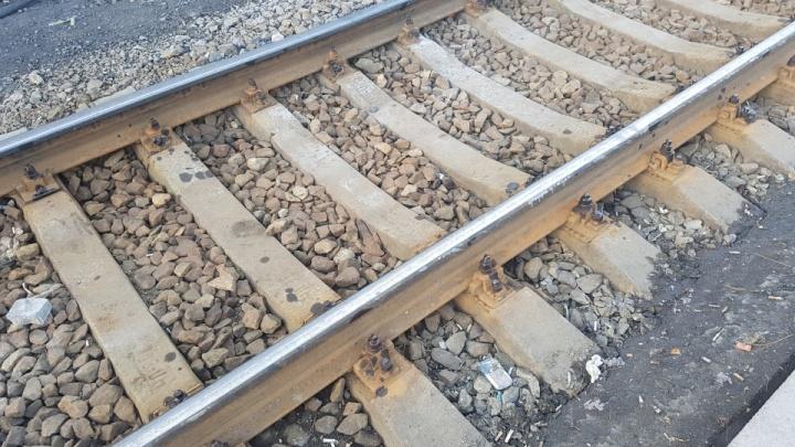 РЖД заплатит 80 тысяч рублей за сбитого поездом лося в Зауралье