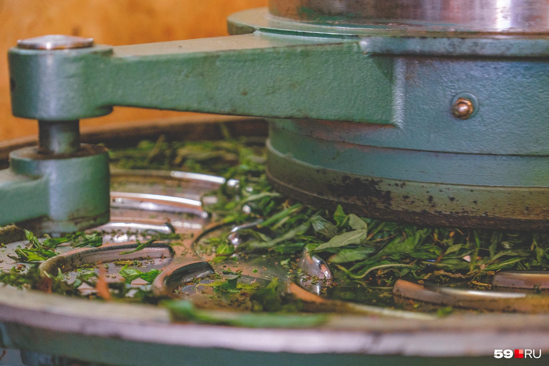 Автомат аккуратно скручивает зелень