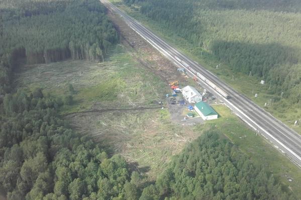 Ущерб при рубке леса оценивают в 1,4 миллиона рублей