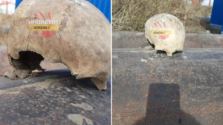 Тюменцы нашли на улице череп человека