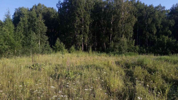 В лесу Заводоуковского района нашли тело женщины