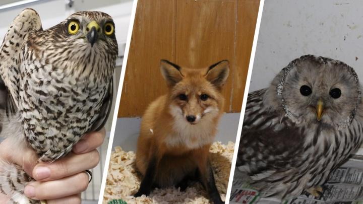 «Ищем дома чайкам и голубям»: приют для диких животных в Архангельске вынужден экстренно переезжать