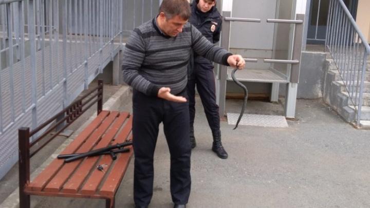 В Тюмени полицейские с помощью дубинок поймали змею и посадили её в бутылку