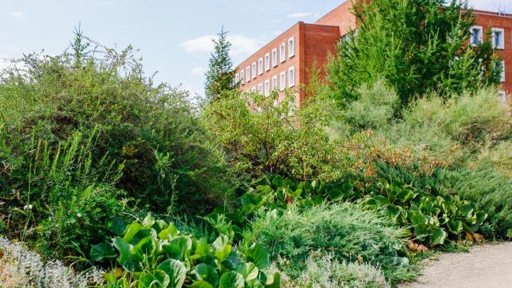 В ботанический сад ЧелГУ челябинцев будут пускать по билетам