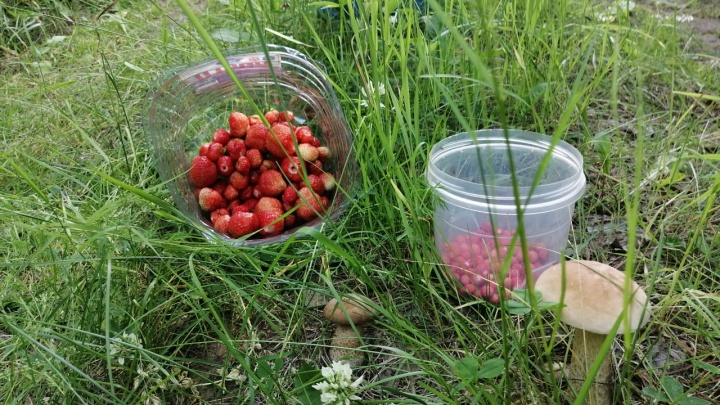 Земляника — направо, подберезовики — налево: куда ехать за грибами и ягодами на Урале в выходные