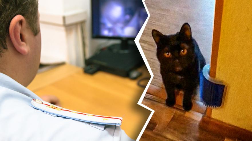Жительница Самары ответит за жестокий «выгул» кота с петлёй на шее