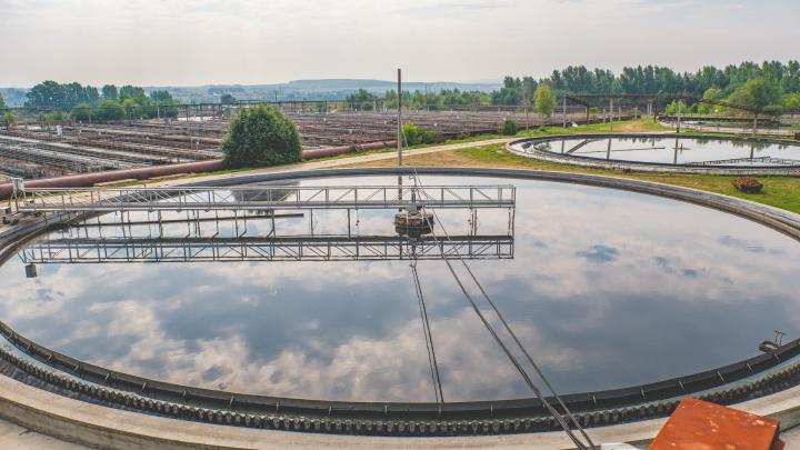 «Питаются загрязнениями, дышат кислородом»: как тихоходки и амёбы чистят канализационные стоки в Перми