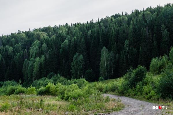 МЧС просит в ближайшие дни не ходить в лес — сейчас это опасно