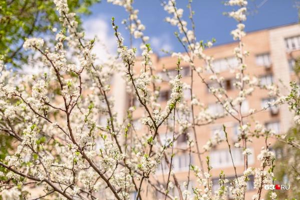 Цветущий май обещает порадовать жителей Самарской области хорошей погодой