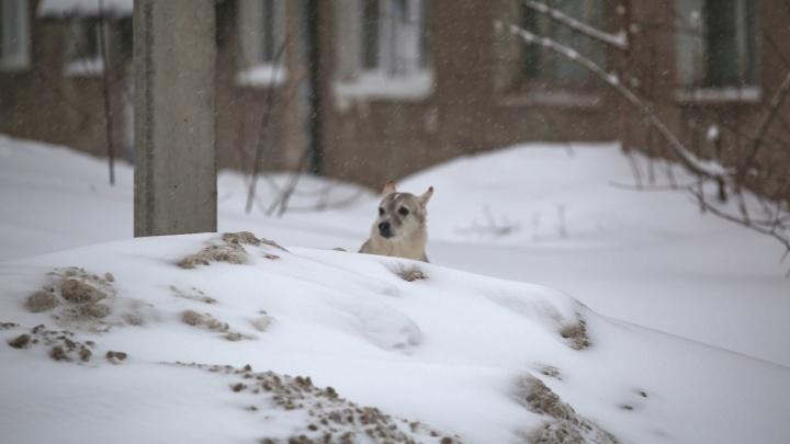 В Уфе для вывоза снега подготовили десять полигонов