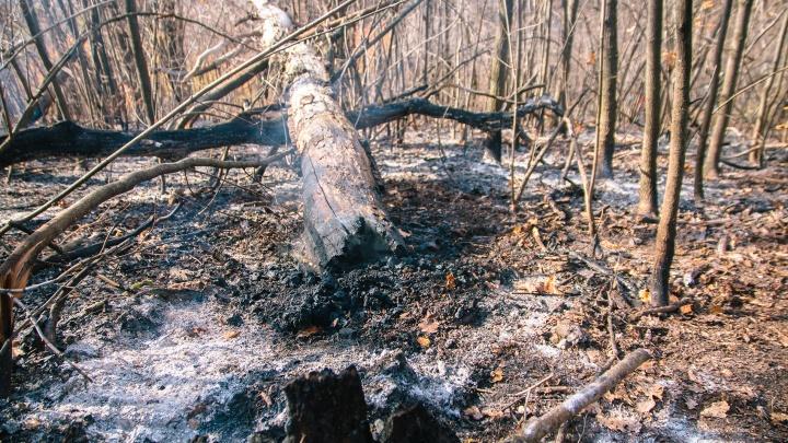 Жителям Самары запретят посещать леса и сжигать мусор на дачах