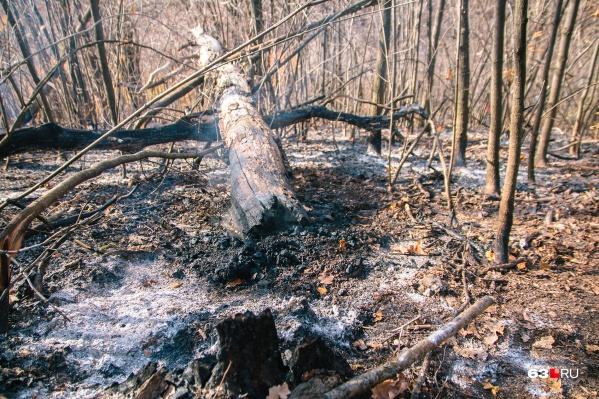 Неосторожное обращение с огнем в лесу — частая причина пожаров