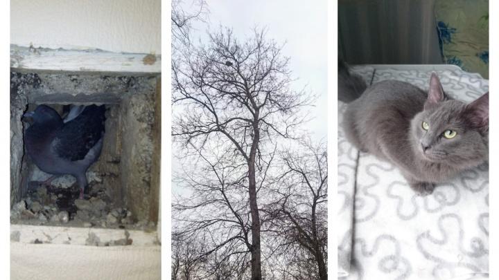 35 кошек, 3 пса, 5 птиц и ондатра: уральский зооспасатель — о зверях, которым не дал погибнуть осенью