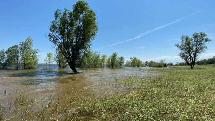 Чистил озеро Бешеное: под Волгоградом в бытовке сгорел человек