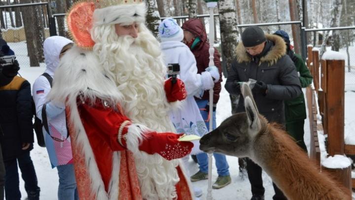 В «Роевом ручье» начала работать заимка Деда Мороза
