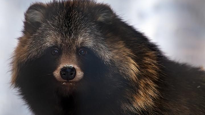 Животные Новосибирского зоопарка выходят из спячки — публикуем милые видео