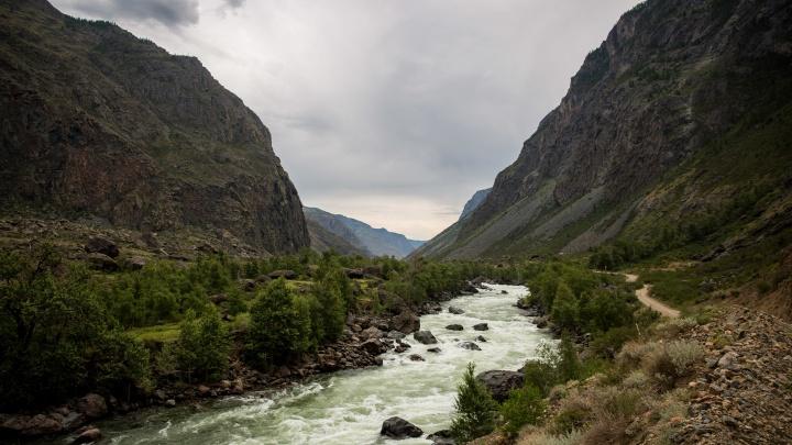 Алтай, гудбай: новосибирцы рванули в горы после обращения Путина, но на базы их больше не пускают