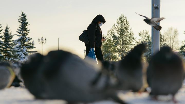 Еще у 256 человек в Архангельской области диагностировали коронавирус. Данные оперштаба региона