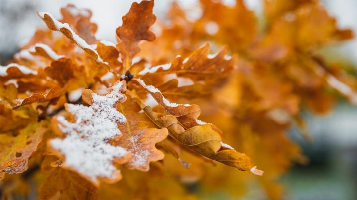 В Кемерово выпал первый снег: публикуем 20 волшебных фото