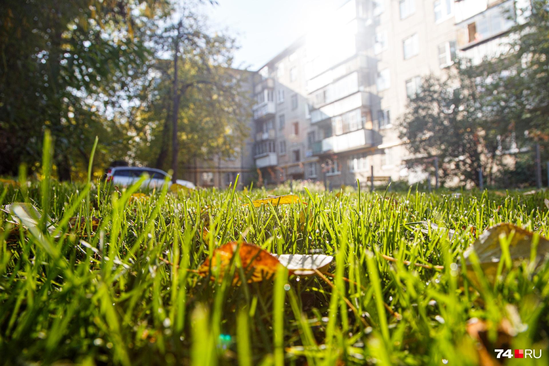 Теперь под окнами у жителей сочный газон, где летом можно не только поиграть в мяч, но и позагорать