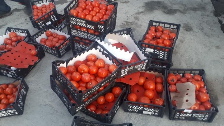 «Я не спекулянт»: корреспондент НГС отправилась за бесплатными помидорами — спасаться пришлось на такси