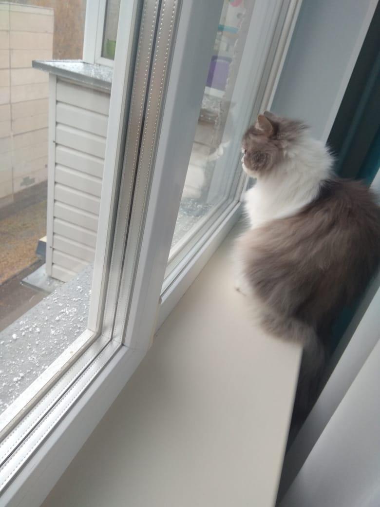 А вот этот котик явно о чём-то размышляет, сидя у окна