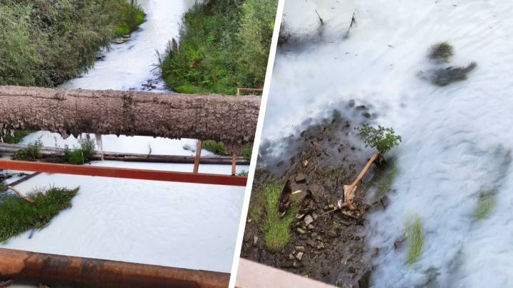 Мэрия поставит видеокамеры возле реки Тулы — рассказываем, что грозит виновникам загрязнения воды