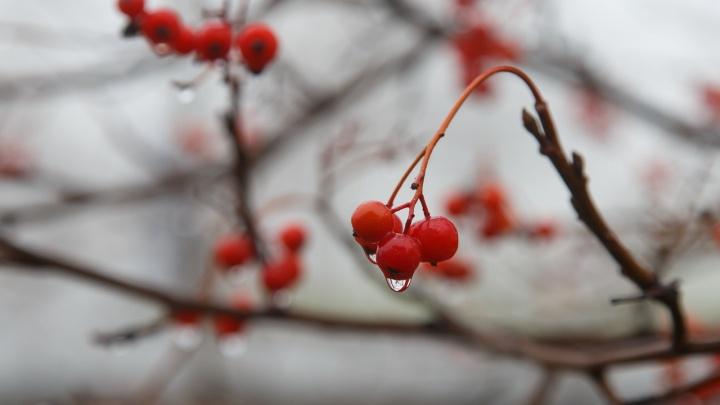 Волгоградскую область ждут майские заморозки