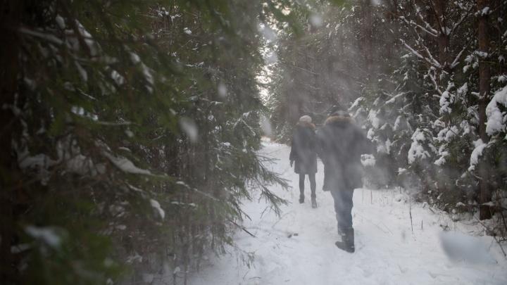 Как выбирать и рубить елку: свердловский лесничий назвал три главных правила
