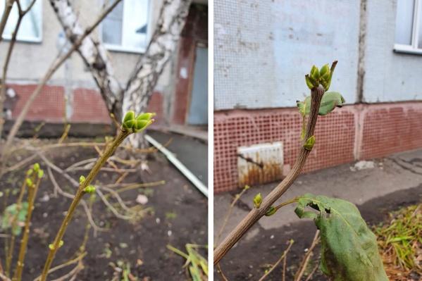 Из-за теплой погоды в городе даже распустились почки деревьев