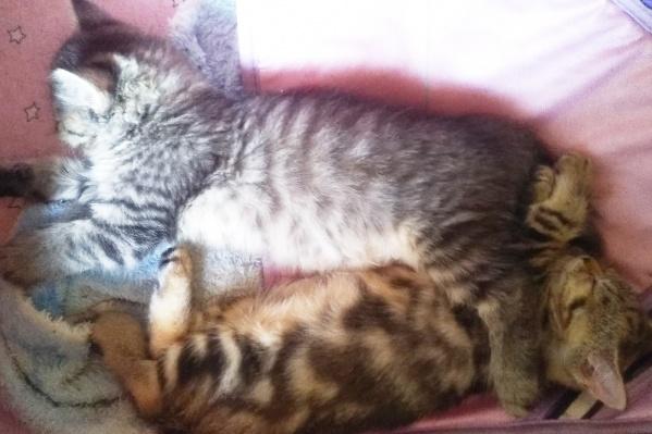Котики, как и мы, ждут тепла в квартирах