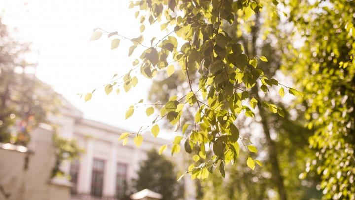«Реванш лета»: какой будет погода в Ярославле в эти выходные