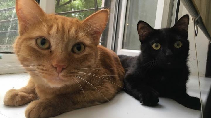 Вагон умиления и маленькая тележка паразитов: почему нельзя целовать собак и кошек