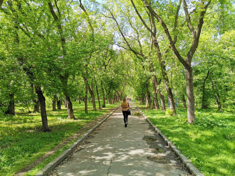 Сейчас парк утопает в зелени, по проекту вырубить должны 14 старых деревьев и 13 кустов, при этом новых посадят больше