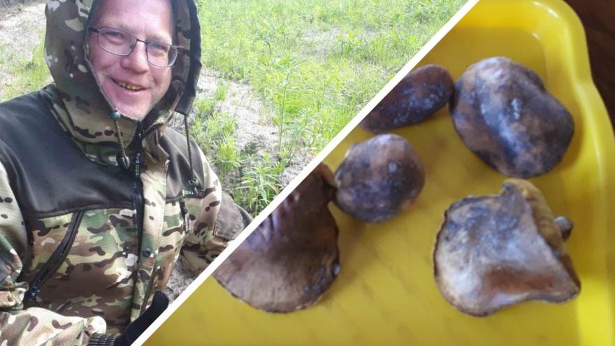 В тюменских лесах уже пошли маслята. Показываем первые трофеи грибников